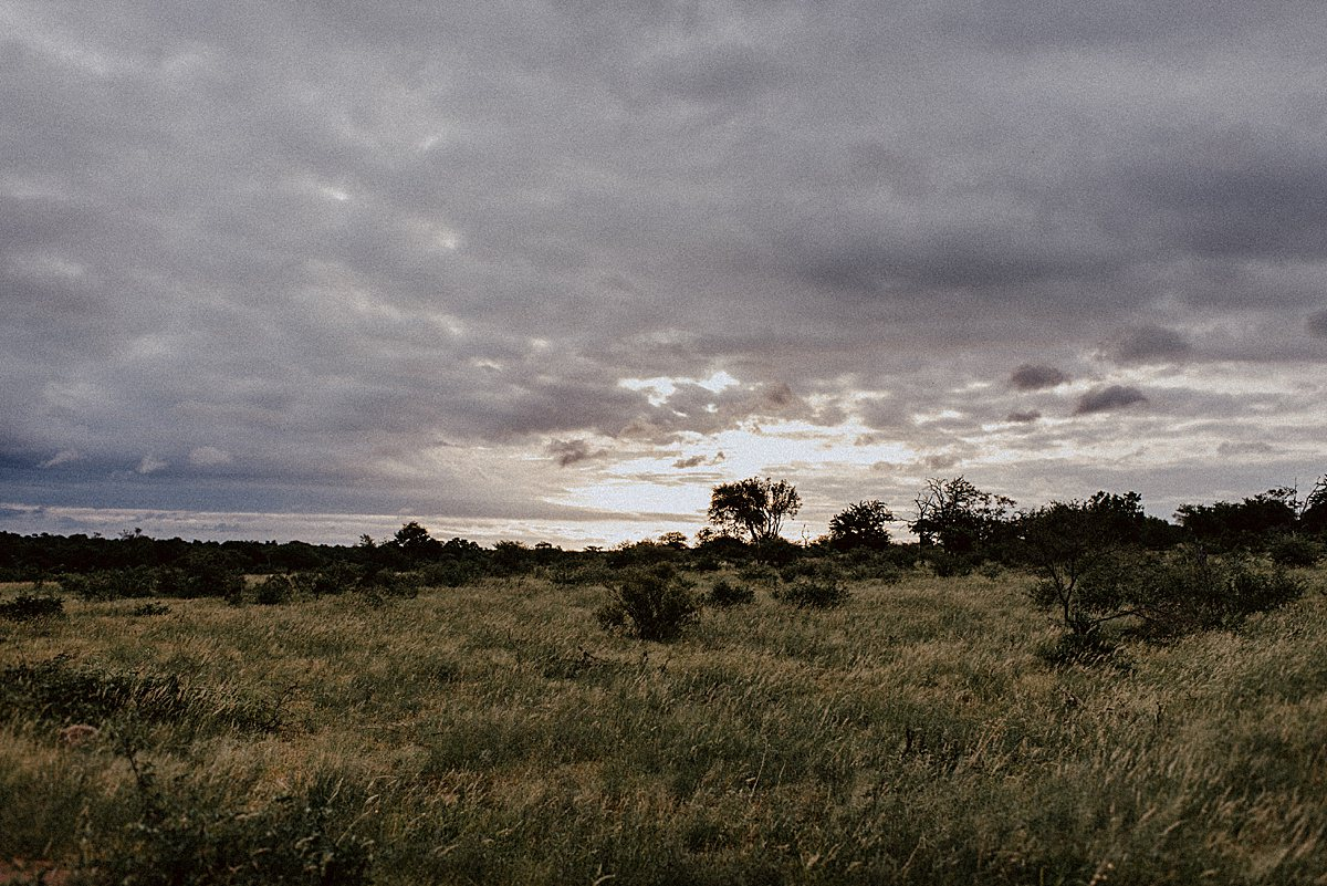Elope in Africa